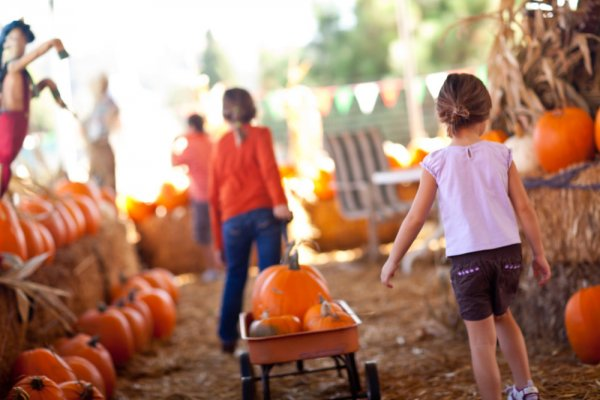 Mayfield Corn Maze & Pumpkin Patch