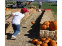 Big Horse Corn Maze and Harvest Festival